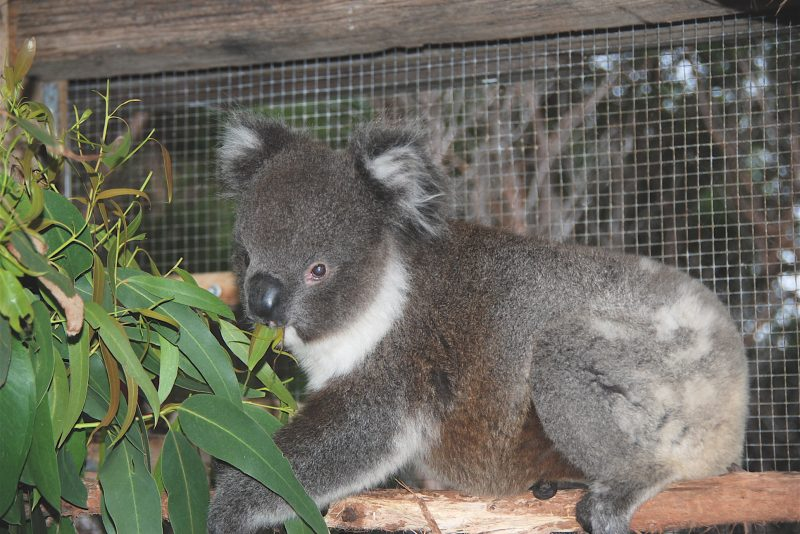 4. In large Enclosure