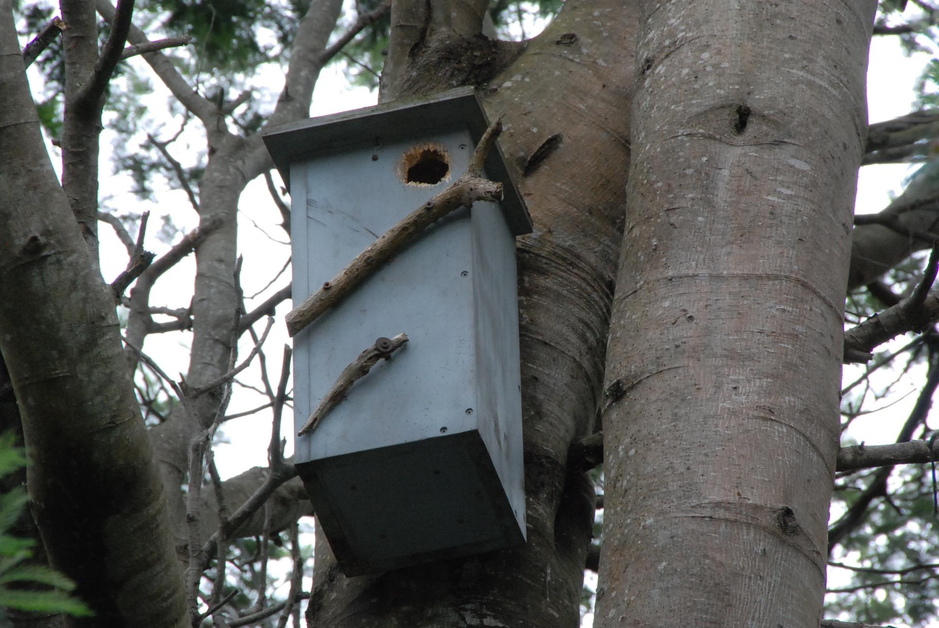 Blackwood glider box