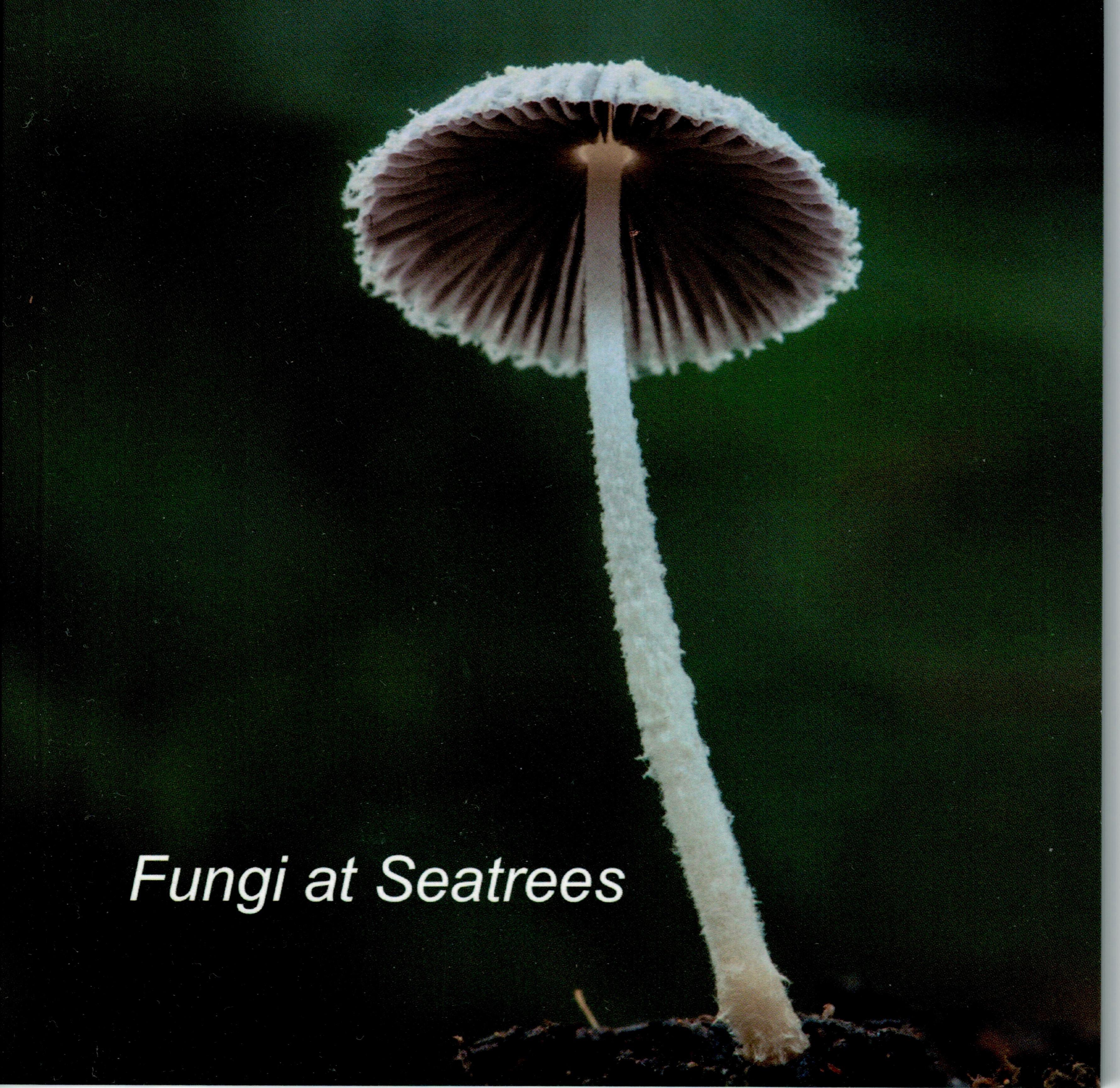 Fungi at Seatrees