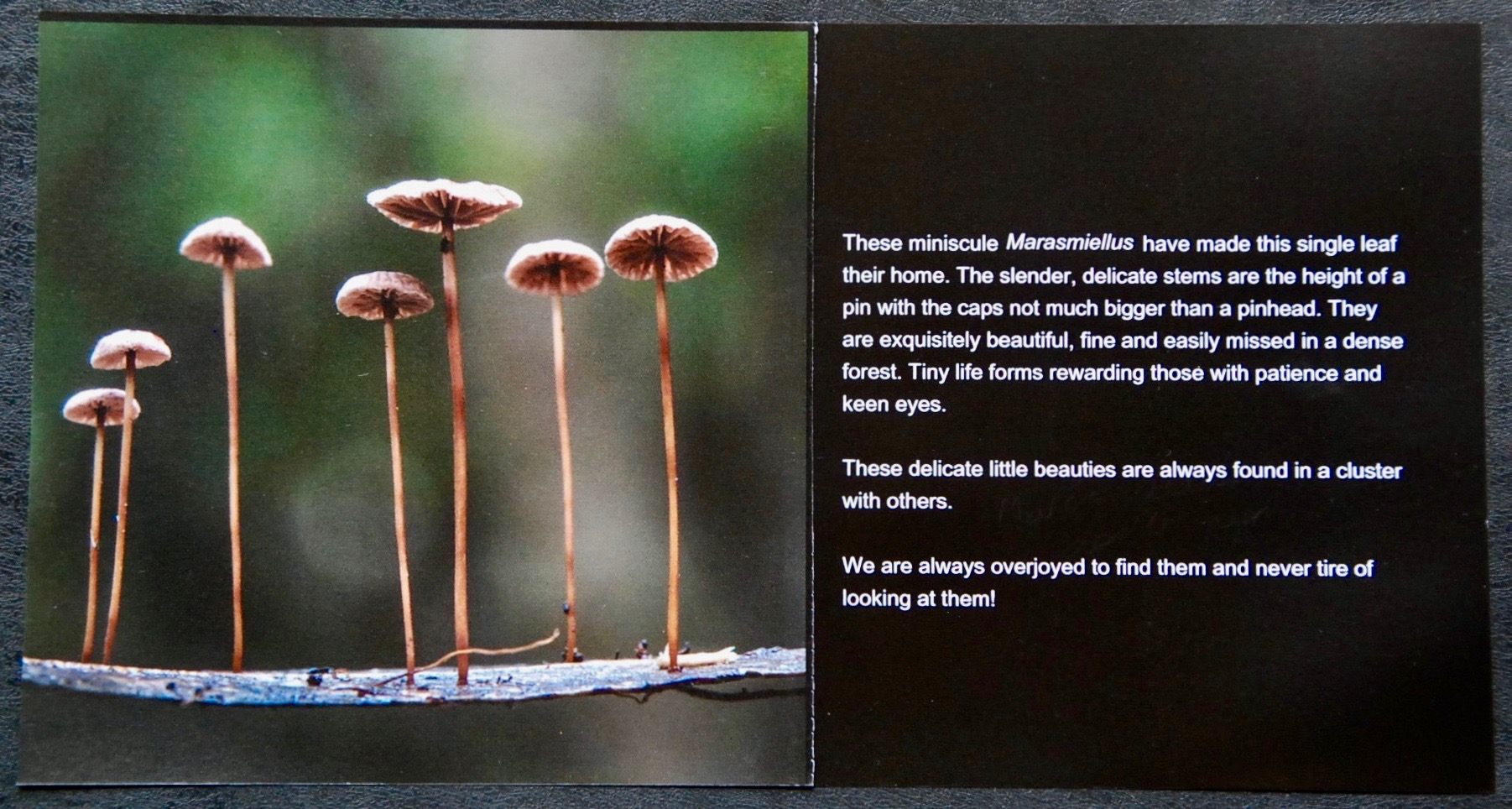 Fungi Book Sample Pages