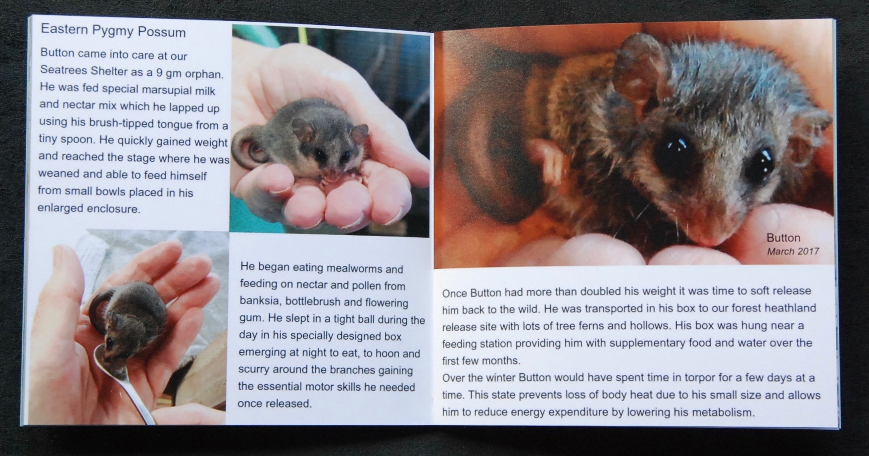 Mammals Book Sample Pages --- Pygmy Possum