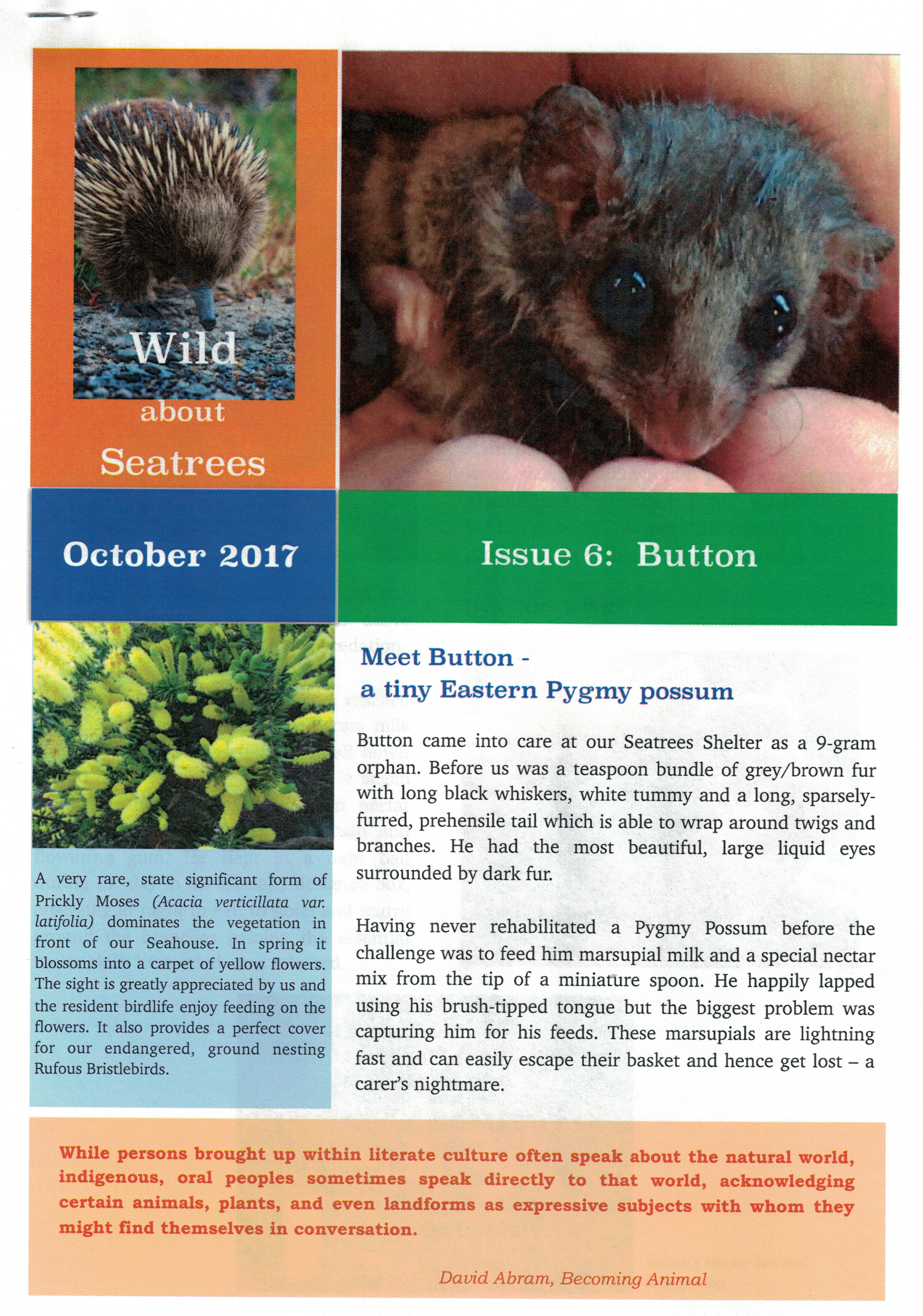 Wild About Seatrees Newsletter
