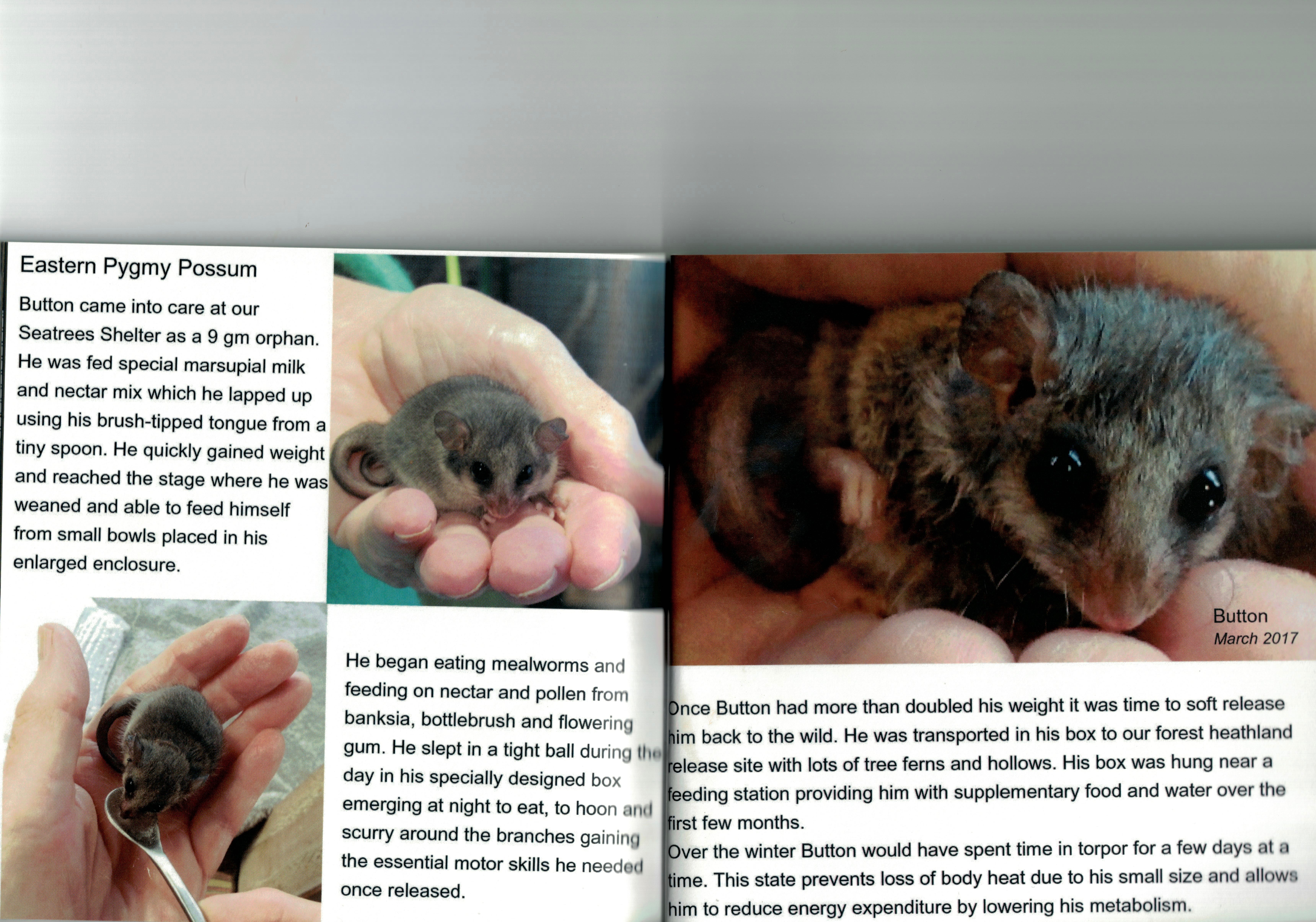 Mammals Book Sample Pages