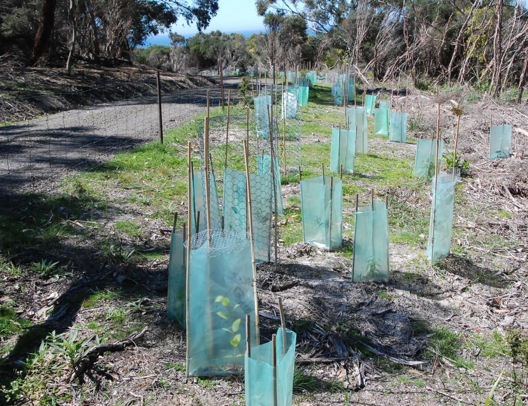 Strip Planting