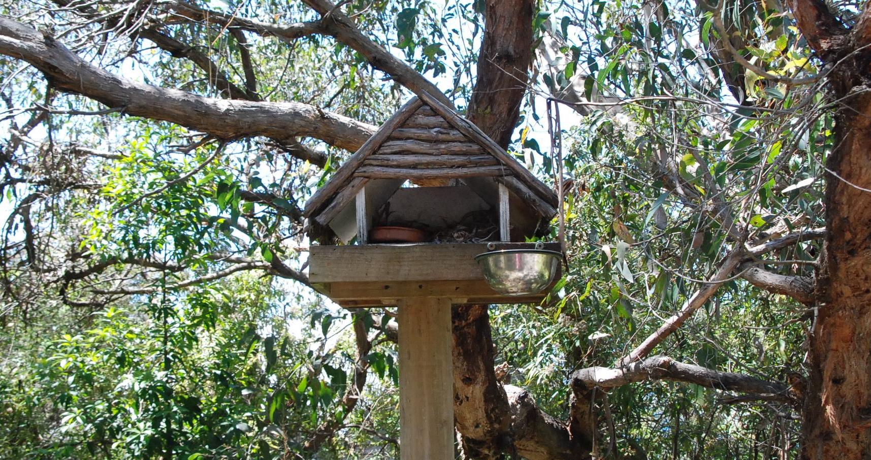 Possum Feeding Station